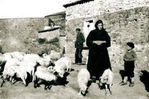 Pastores patones